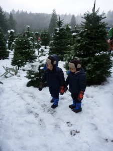 u cut christmas trees near seattle washington
