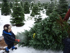 ucut christmas trees near seattle with kids