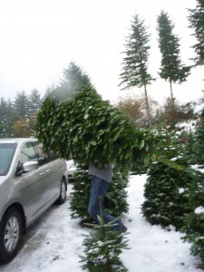 how to bring home ucut christmas trees near seattle with kids