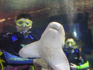 swim with sharks in singapore