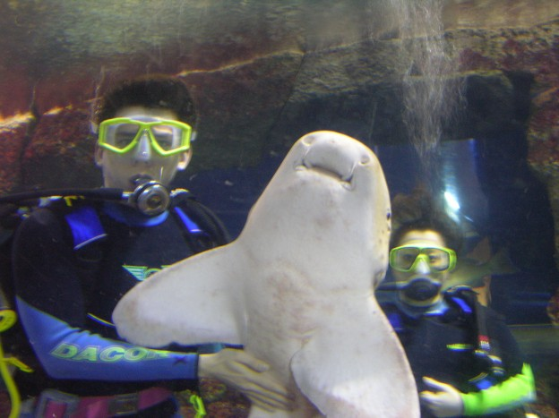 swimming with the sharks in singapore