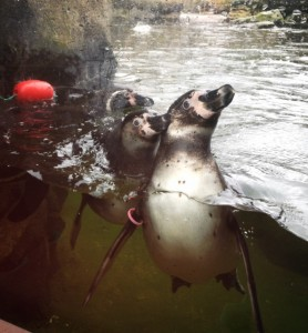 Woodland park zoo with kids and penguins