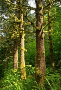gorgeous greenery on a hike with kids near seattle