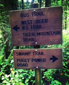 hiking with kids near seattle the swamp trail is easy and fun