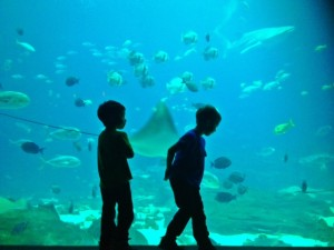 Atlanta with kids at the aquarium