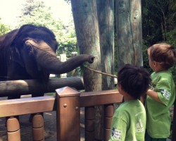 feeding elephants at woodland park zoo