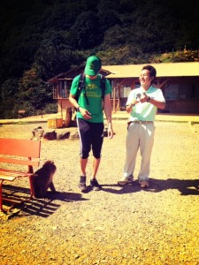 monkeys at arashiyama