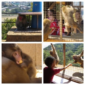 monkeys in arashiyama