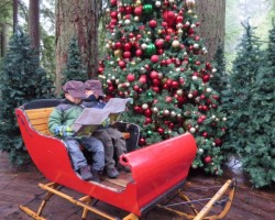 sleigh at capilano suspension bridge