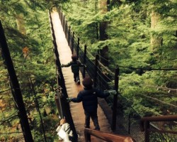 treetop adventure capilano suspension bridge