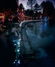 Lights at VanDusen Gardens