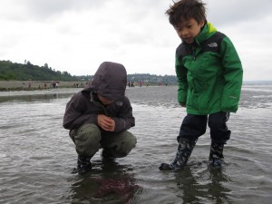 exploring with seattle aquarium at lowtide