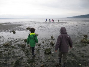 low tide exploring Tidepools with seattle aquarium