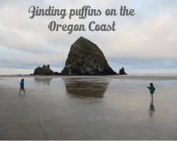 looking for puffins at cannon beach with kids