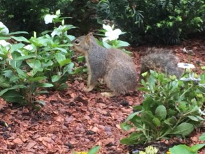 squirrel in the gardens