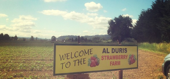 where to pick strawberries near Seattle