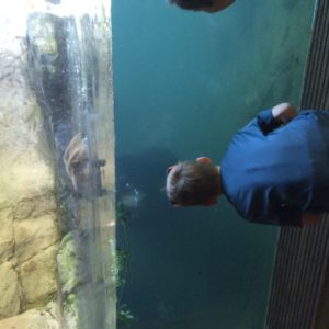 seattle with kids bear swimming at woodland park zoo