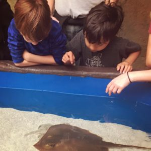 Stingray Touch Pool at Point Defiance Zoo in Tacoma