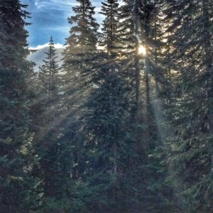 Sunlight in the forest in washington