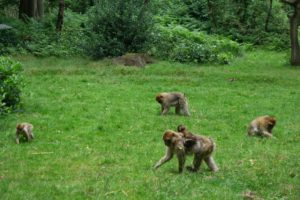 Monkey Forest in England with kids