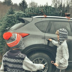 Tree on the Roof of the car