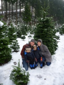 christmas tradition u-cut trees