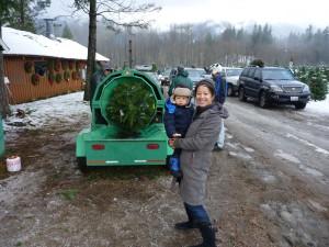 christmas tree near seattle