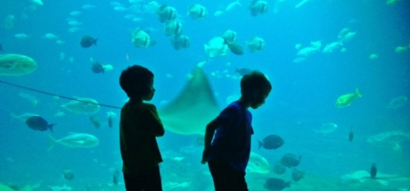 Georgia aquarium with kids