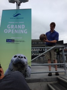 visiting the seals at the seattle aquarium with kids