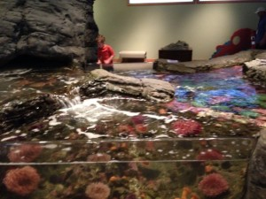 touchpool at seattle aquarium with kids