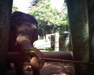 When there were elephants at Woodland Park Zoo