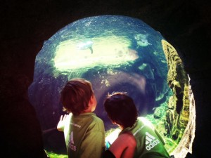 seattle with kids at Woodland Park Zoo