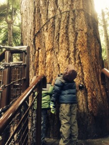 capilano suspension bridge with kids in vancouver is a must-see