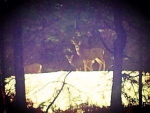 suncadia deer on the field while we sled with kids