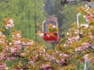 mt pilatus trams and cherry blossoms with kids