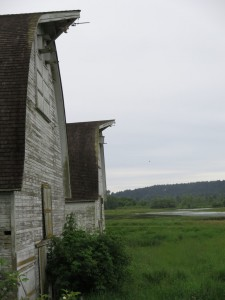 barns at nisqually wildlife refuge