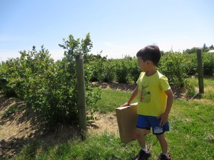 berry picking at Emma Lea farm