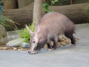 aardvark at the point defiance zoo