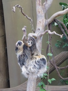 sloth at the point defiance zoo