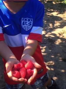 raspberries at Remlinger Farm