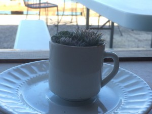 cute little cacti in a coffee cup