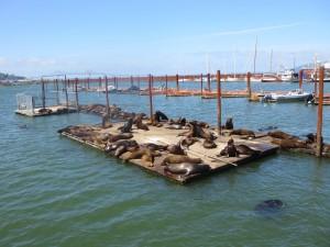 seals on the pier in Astoria