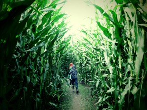 children in the corn
