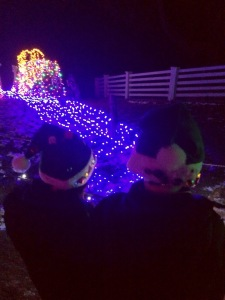 Wildlights at Woodland Park Zoo in 2014