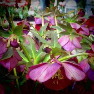 pretty purple flowers at the northwest flower show