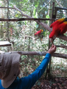 helping with the morning feed at the Belize Zoo