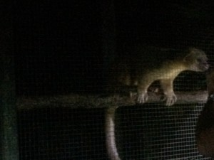 Belize Zoo Night visit with kids