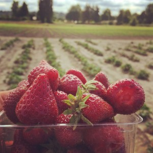 u-pick strawberries close to Seattle and bucketlisting our summer