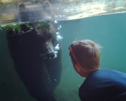 where to watch bears swim