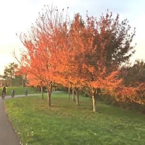 autumn seattle leaves